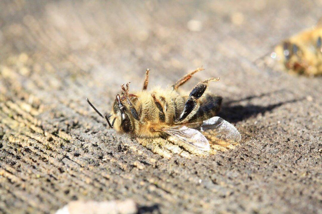 Štúdia: Žiarenie z mobilných telefónov môže zabíjať hmyz